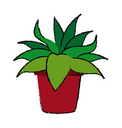 potted plant flora natural decoration vector image