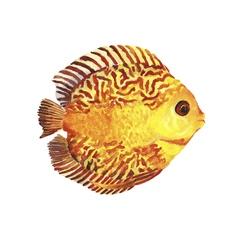 Watercolor tropic fish vector image