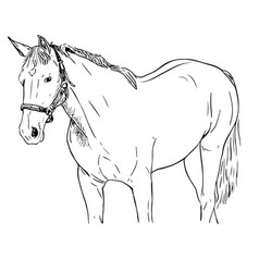 hand - drawn of a horse vector image vector image