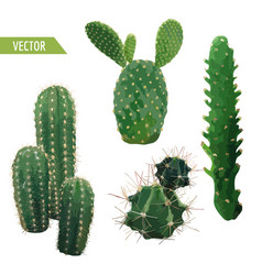 Cactus plant exotic tropical summer background vector