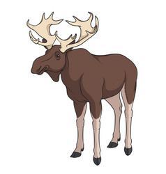color image of elk moose vector image
