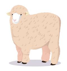 Merino sheep vector
