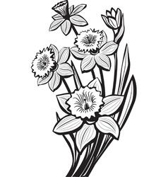Sketch narcissus flowers vector