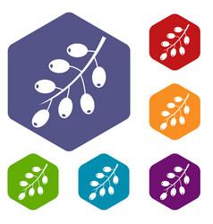 Barberry branch icons set hexagon vector