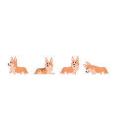 cartoon corgi flat puppy for stickers postcards vector image