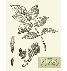Image leaves flowers and fruits ash vector