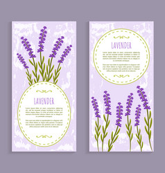 lavender collection purple vector image