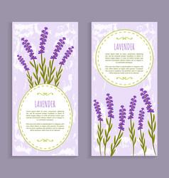 lavender collection purple vector image