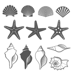 Sea shells and starfish set vector