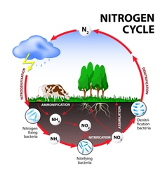nitrogen cycle vector image