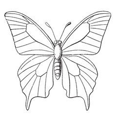 butterfly outline vintage vector image