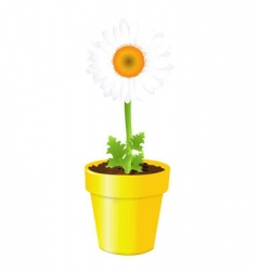 chamomile in pot vector image