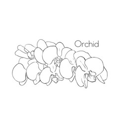 orchid sketch of an orchid flower floral element vector image