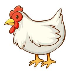 White chicken on background vector