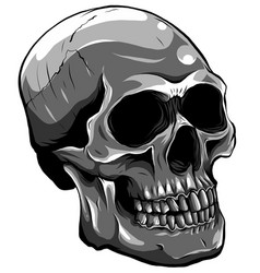 monochromatic realistic red skull vector image
