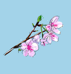 Watercolor cherry blossoms vector