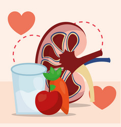 world kidney day vector image