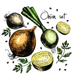Set of onion vector image vector image