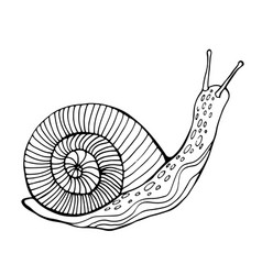 snail coloring page for children and adults vector image