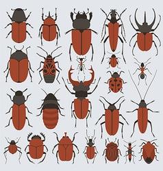 Beetles set vector