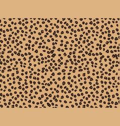 leopard fur animal background and texture good vector image