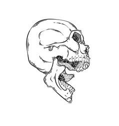 Lined tattoo of skull vector