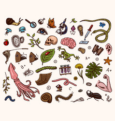 scientific laboratory in biology icon set vector image