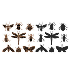 set insect silhouette vector image