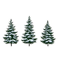christmas fir trees vector image