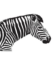 image of an zebra head vector image