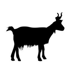 black silhouette of mountain goat on white vector image