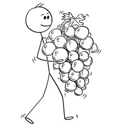 cartoon of man carrying big ripe bunch or grapes vector image