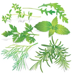 Collection fresh herbs vector