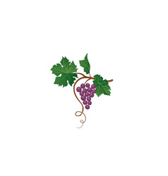 grape bunch floral sign garden wine background vector image