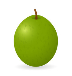 Guava isolated vector