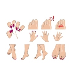 hands feet and nails manicure vector image