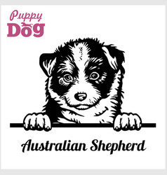 Puppy australian shepherd - peeking dogs - breed vector