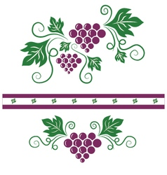 Purple grapes and green vines vector