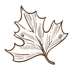 autumn tree leaf isolated sketch nature fall vector image
