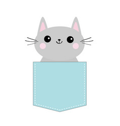 cat in blue pocket cute cartoon character gray vector image