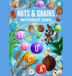Nuts grains and cereals with vitamins minerals vector