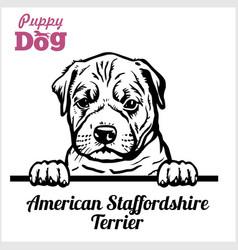 Puppy american staffordshire terrier - peeking vector