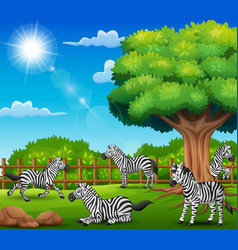 The zebras are enjoying nature by the cage vector
