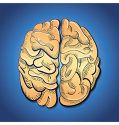 brain and creativity vector image
