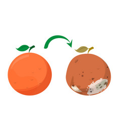 Bad rotten grapefruit food waste isolated vector