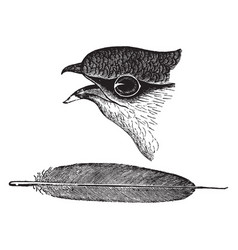 Chimney swift head and feather vintage vector