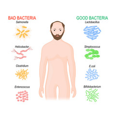 Good and bad bacteria probiotics gut flora vector