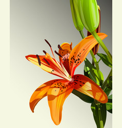 Lily watercolor backgroun vector