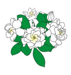 bouquet of gardenia jasminoides cape jasmine vector image vector image