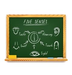 The Five Senses vector image